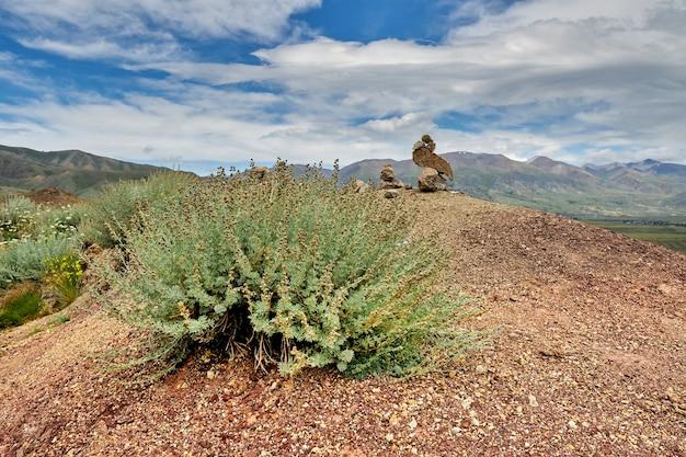 Green shrubs growing on the red-yellow desert hills. mountain landscape