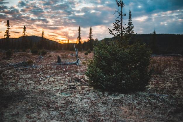 凍った地面に緑の低木