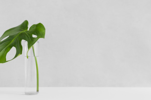 Green single monstera leaf in glass bottle against white backdrop