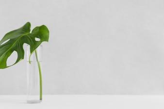 Green single monstera leaf in glass bottle against white backdrop