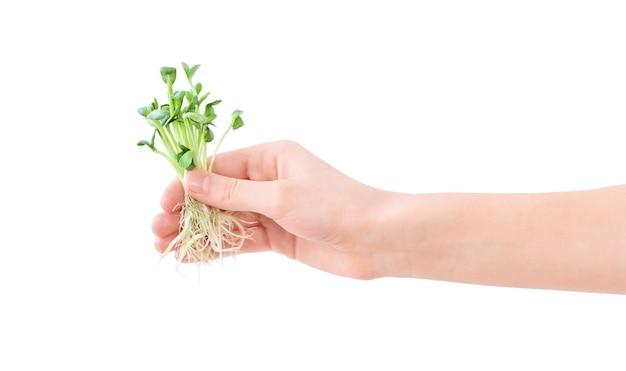 흰색 배경에 고립 손에 녹색 작은 묘목