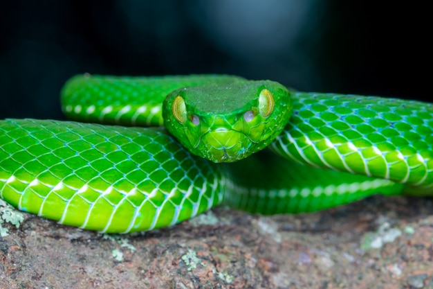 Green snake portrait wildlife