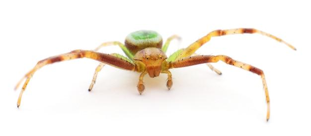 Зеленый паук, изолированные на белом фоне.