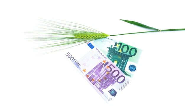 Green spikelets of barley lie on banknotes isolated on white background