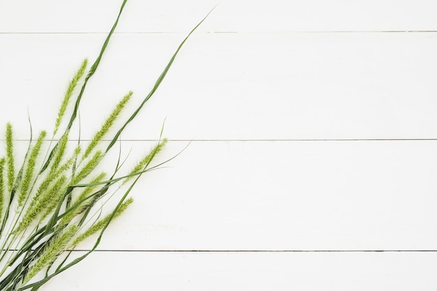 Green spikes and grass on white wooden wall