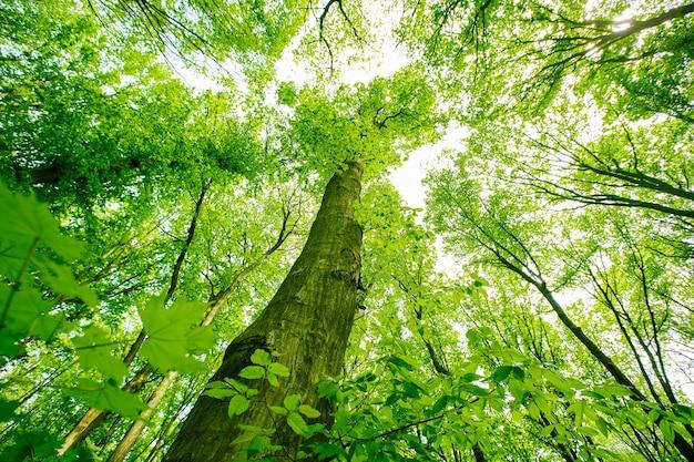 Зеленый весенний лес с зелеными листьями