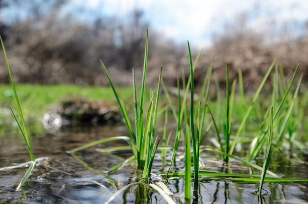 Зеленая весенняя трава.