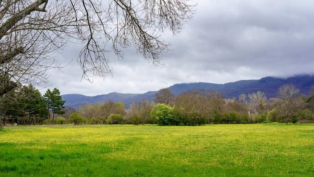 山の間の谷に緑の牧草地と黄色の野花がある緑の春の風景。マドリッド。