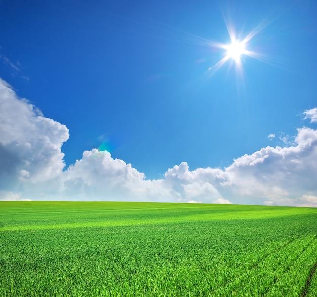 푸른 봄 초원과 푸른 하늘