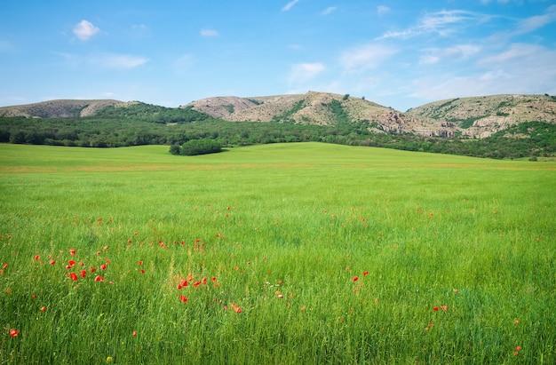 산에서 녹색 봄 초원입니다. 자연의 구성.