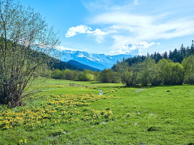 Green spring meadow in the mountains of svaneti