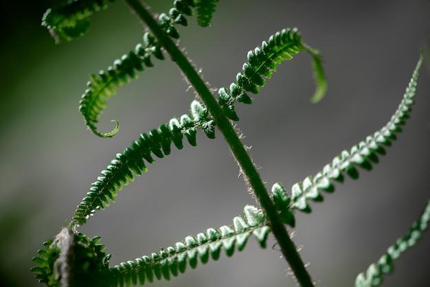 야생 초원 식물 근접 촬영 녹색 봄 또는 여름 배경