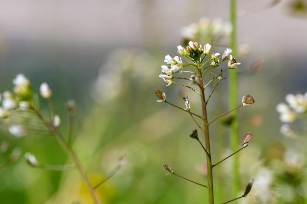 緑の春の植物