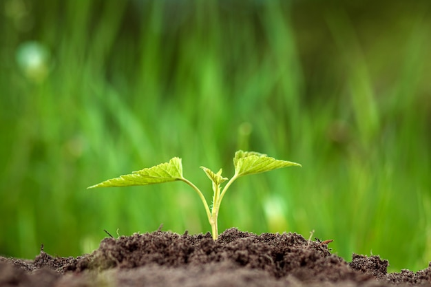 A green sprout breaks out of the ground.