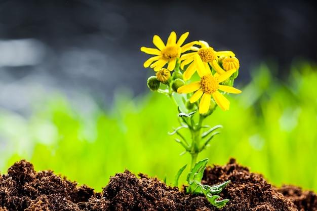 有機質土壌の種子から成長する緑の芽