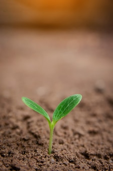 Green sprout growing from soil background with copyspace