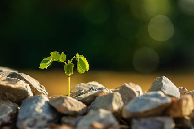 緑の岩の土壌の山で成長している緑の芽ぼかしと成長と環境の概念