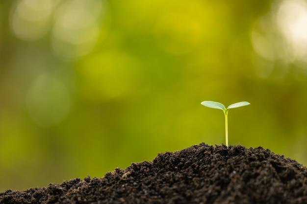 Зеленый росток растя в почве с внешним солнечным светом и зеленой предпосылкой нерезкости. концепция выращивания и окружающей среды