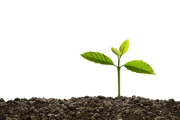 土から生えている緑の芽