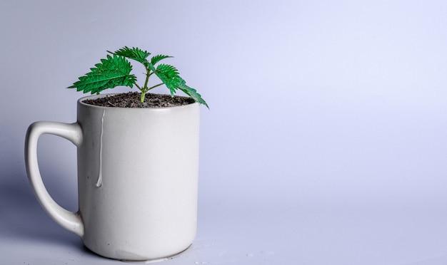 컵에 녹색 새싹. 재무 계획, 돈 성장 개념. 공간 복사