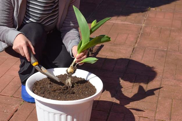 Зеленый росток в женской руке. саженцы в руках. заботьтесь об окружающей среде земли.