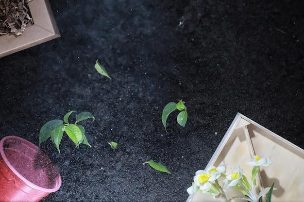 Зеленый росток на земле. концепция весны. саженцы в земле. обновление природы - это идея. руки сажают росток в землю.