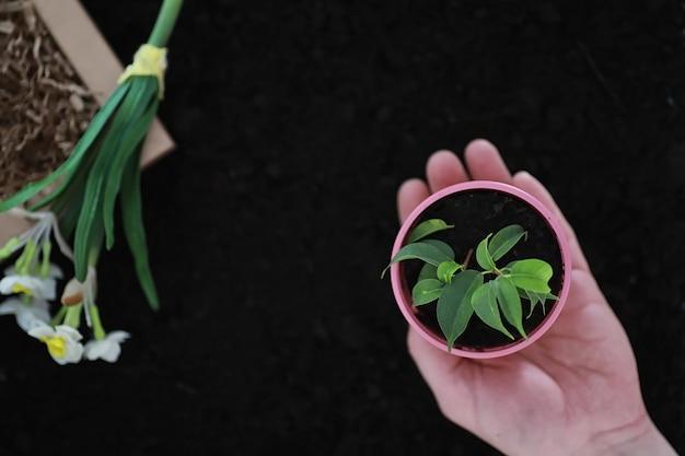 지상에 녹색 새싹입니다. 봄 개념입니다. 땅에 묘목. 자연을 업데이트하는 것은 아이디어입니다. 손은 땅에 새싹을 심습니다.