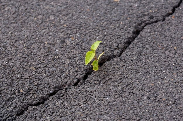 Green sprout, plant on gray cracked asphalt, leader concept