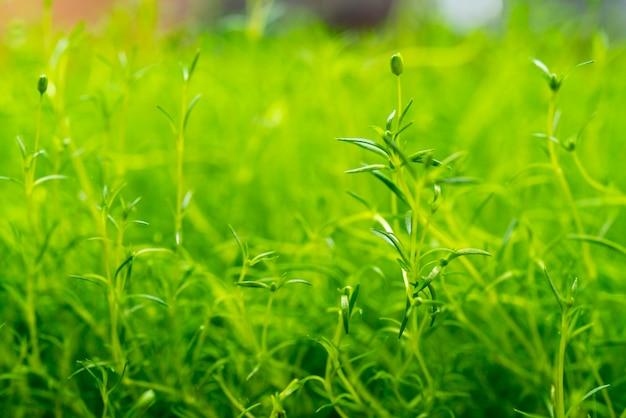 농업 식물의 녹색 새싹입니다. 식용 식물을 키우고 있습니다.