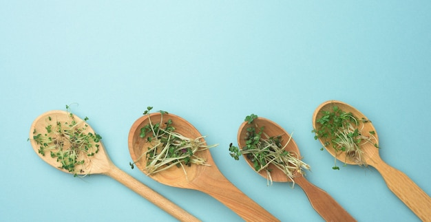 Chia, arugula 및 파란색 배경, 평면도에 나무로되는 숟가락에 겨자의 녹색 콩나물. 비타민 c, e, k가 함유 된 식품, 복사 공간에 유용한 보충제