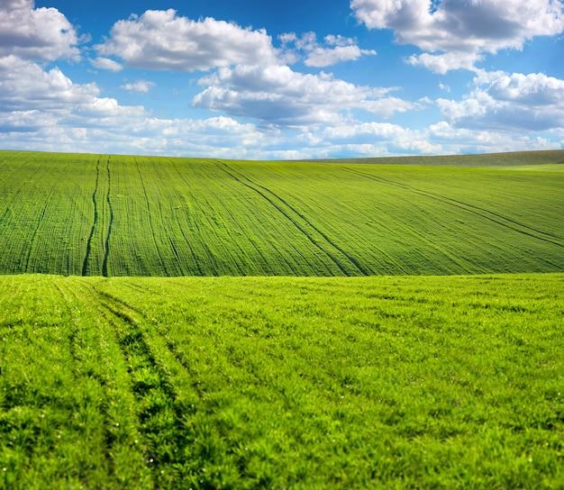 농업 분야의 언덕, 봄 풍경과 구름과 하늘에 녹색 콩나물