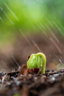 Green sprouts on soil in rain.