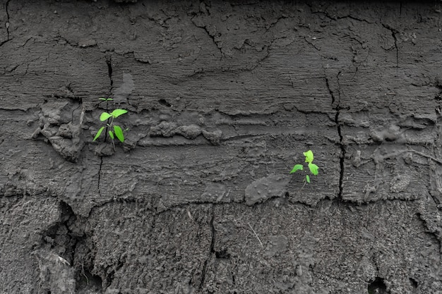 Green sprouts sprout from dry cracked earth