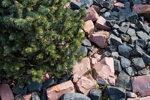 緑のトウヒは花崗岩の石の上に生えています。高山の自然の背景。 ãâ¡opyスペース。