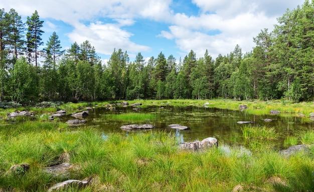바위, 스웨덴과 푸른 호수 위에 녹색 가문비 나무