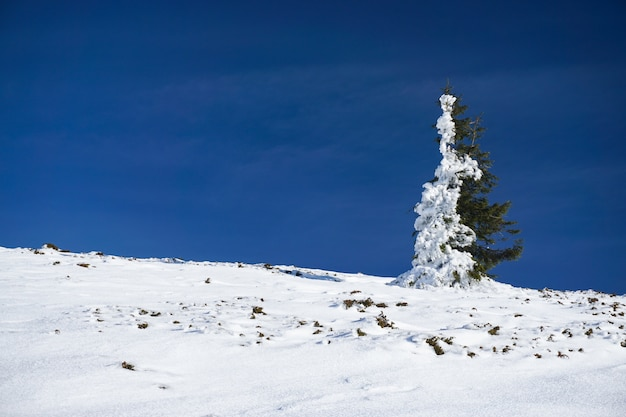 Green spruce tree with half of it covered with snow