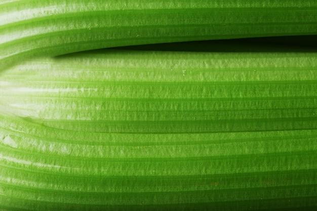 セロリのクローズアップの緑の茎