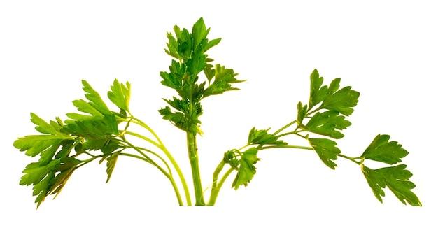 孤立した白い上に葉を持つパセリの緑の茎