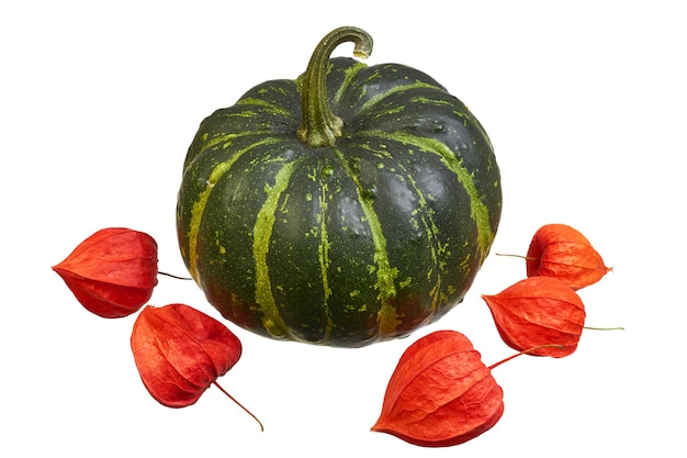 Green striped pumpkin and red physalis on a white background. autumn concept