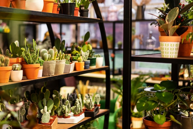 Green succulent in a clay pot in loft interior in scandinavian style
