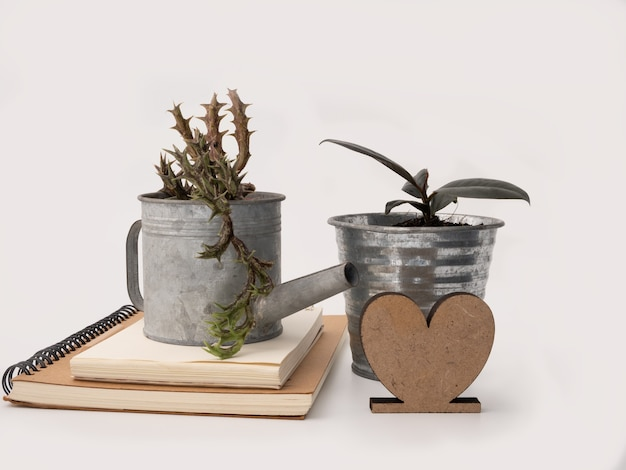 Green succulent and ficus elastica burgundy or rubber plantsorbea variegata  or starfish plant in zinced pot brown note book and heart icon for text  isolated on white love environment concept