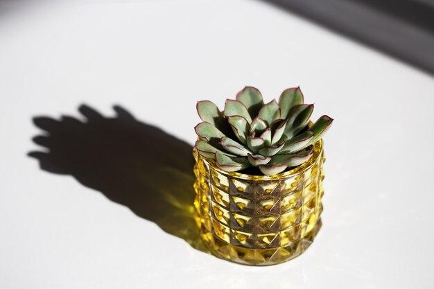 흰색 바탕에 노란색 유리 냄비에 녹색 즙 프리미엄 사진