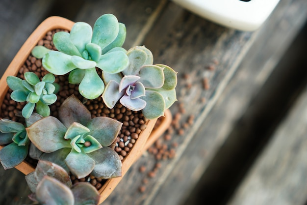 Green succulent plants in a pot made