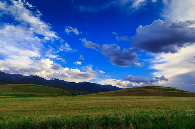 Зеленые летние цветущие холмы на фоне гор и неба