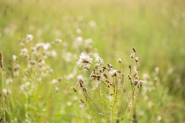 녹색 여름 단풍 추상 텍스처와 나뭇잎과 흐림 배경.