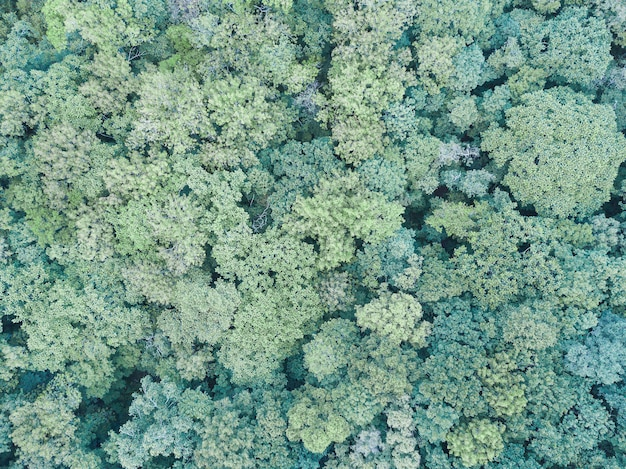 Green summer forest aerial drone view. earth day, environment protection.