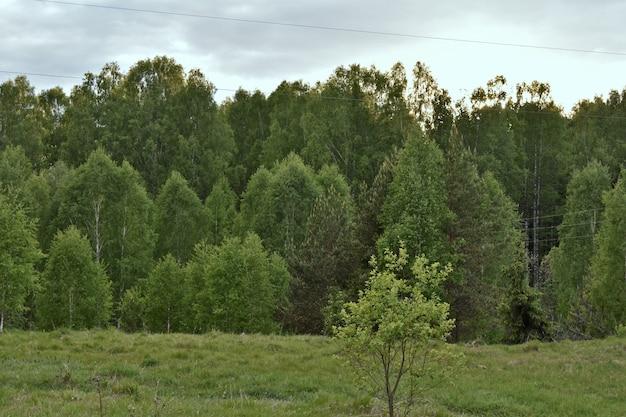 日没時の緑の夏の森