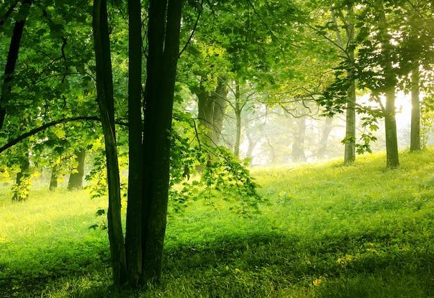 緑の夏の森の自然の背景