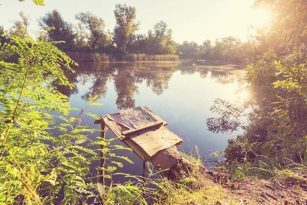 森の中の緑の夏の湖