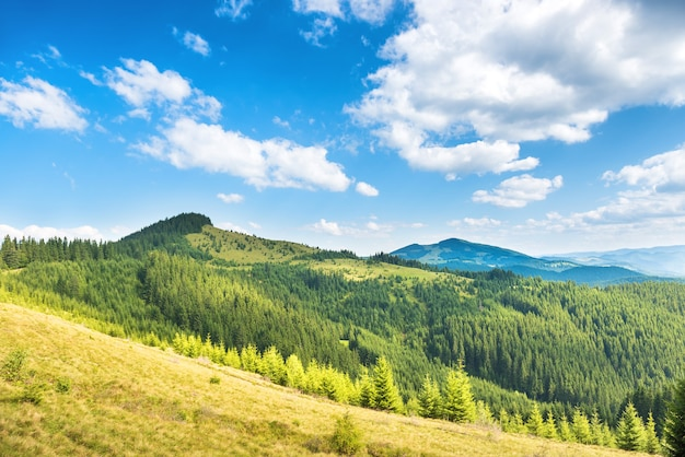 Green sunny hills with forest, blue sky and clouds. nature landscape